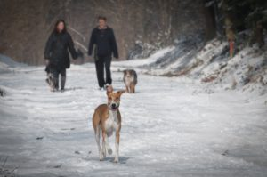 pexels-photo-104329-may december romances-dog walking-couple walking dogs-older woman younger men